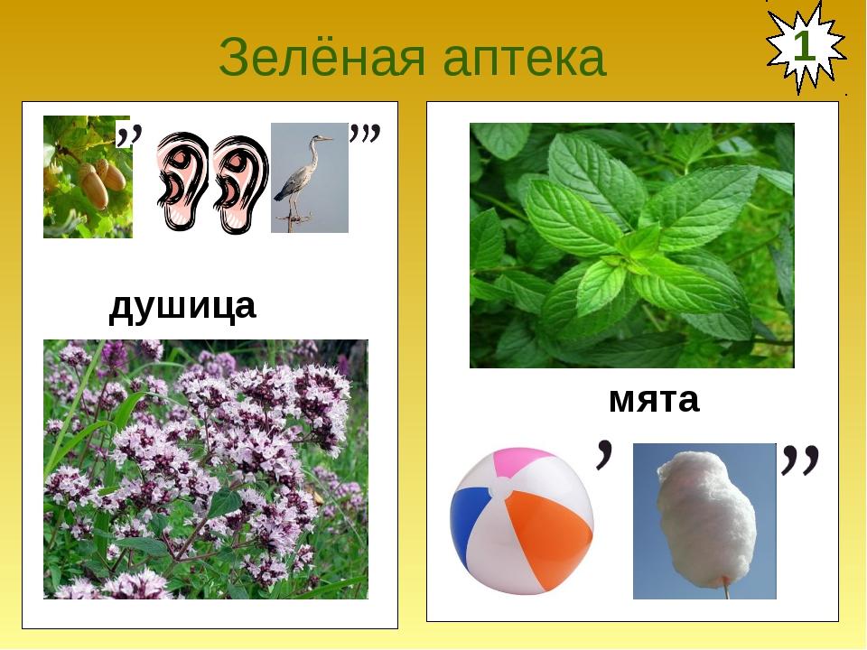 Зелёная аптека душица мята 1