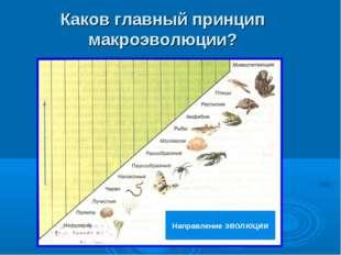 Каков главный принцип макроэволюции? Направление эволюции