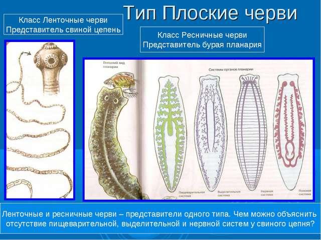 Тип Плоские черви Класс Ресничные черви Представитель бурая планария Класс Ле...