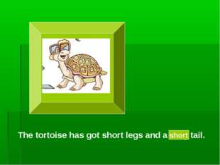 The tortoise has got short legs and a long tail. short