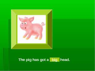 The pig has got a small head. big