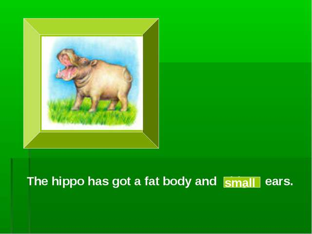 The hippo has got a fat body and big ears. small