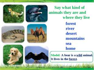 Say what kind of animals they are and where they live forest river desert mou