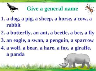 Give a general name a dog, a pig, a sheep, a horse, a cow, a rabbit a butterf