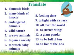 Translate domestic birds many kinds of insects endangered animals wild nature