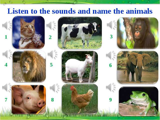 Listen to the sounds and name the animals 1 2 3 4 5 6 7 8 9