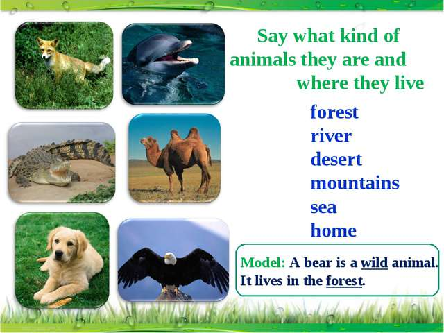 Say what kind of animals they are and where they live forest river desert mou...