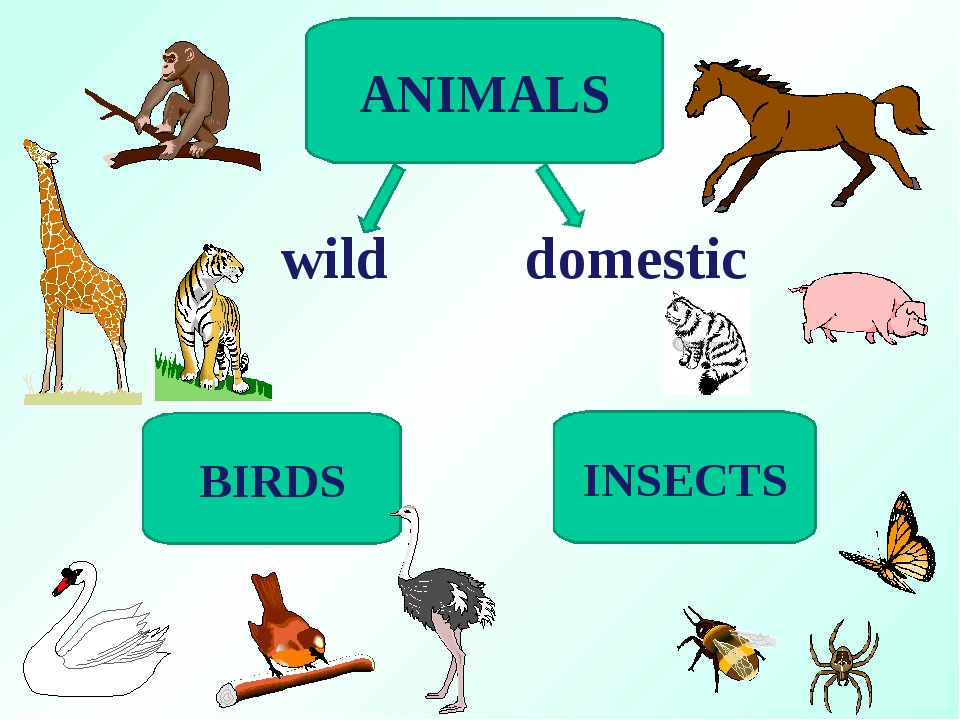 ANIMALS BIRDS INSECTS wild domestic
