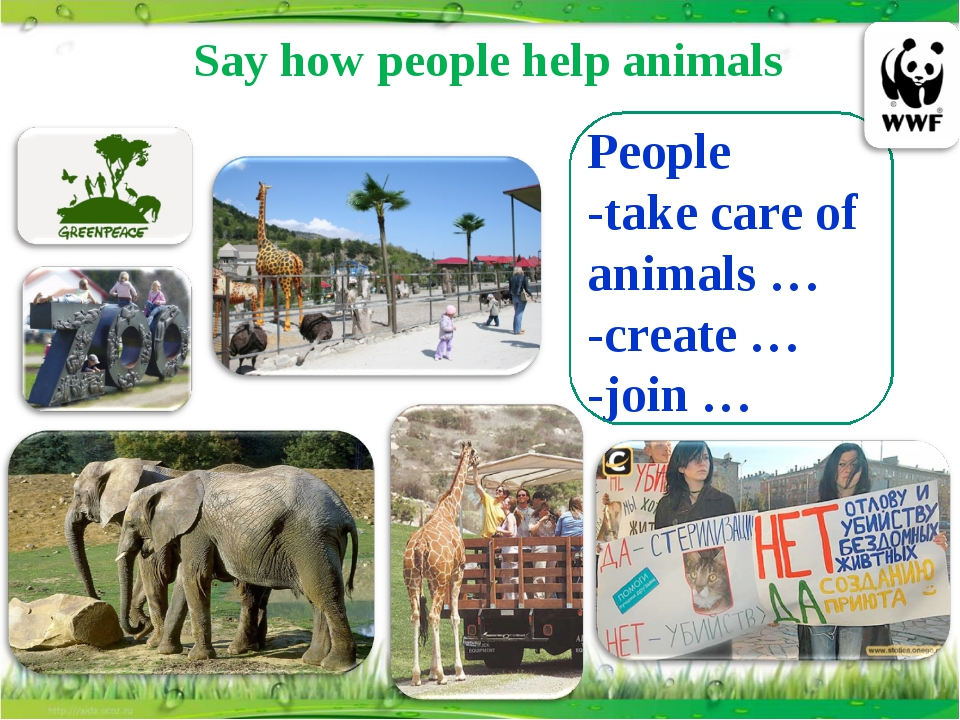 Say how people help animals People -take care of animals … -create … -join …