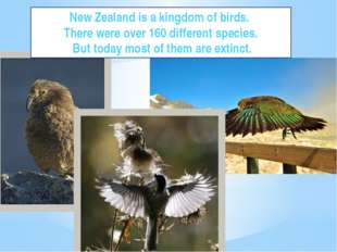 Parrots New Zealand is a kingdom of birds. There were over 160 different spec