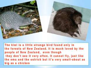 The kiwi is a little strange bird found only in the forests of New Zealand. I