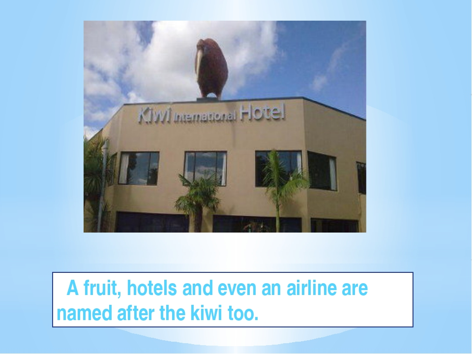 A fruit, hotels and even an airline are named after the kiwi too.