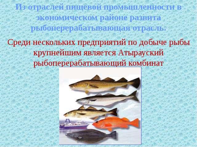 Из отраслей пищевой промышленности в экономическом районе развита рыбоперера...