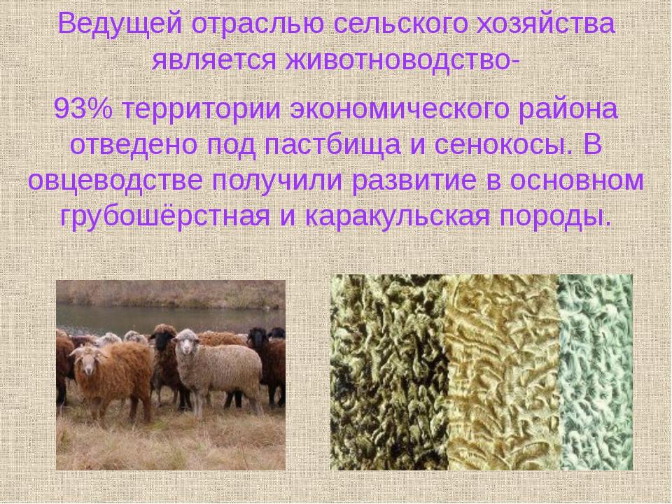 Ведущей отраслью сельского хозяйства является животноводство- 93% территории...