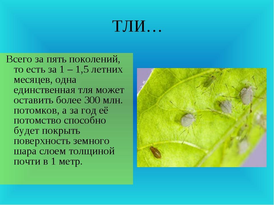 ТЛИ… Всего за пять поколений, то есть за 1 – 1,5 летних месяцев, одна единств...