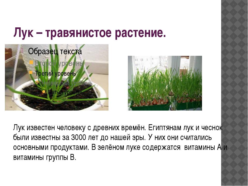 Лук – травянистое растение. Лук известен человеку с древних времён. Египтянам...