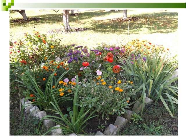 «Цветники у школы» В апреле 2012 года в школе по инициативе отряда был провед...