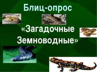Блиц-опрос «Загадочные Земноводные»