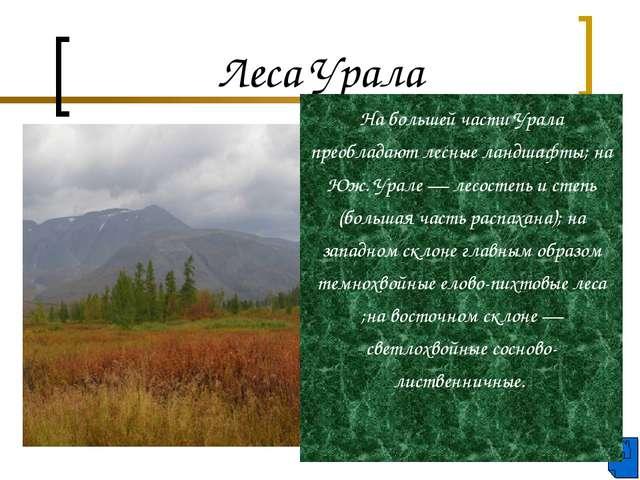 Леса Урала На большей части Урала преобладают лесные ландшафты; на Юж. Урале...