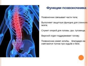 Позвоночник связывает части тела; Выполняет защитную функцию для спинного моз