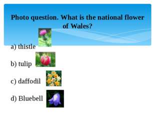 Photo question. What is the national flower of Wales? a) thistle b) tulip c)