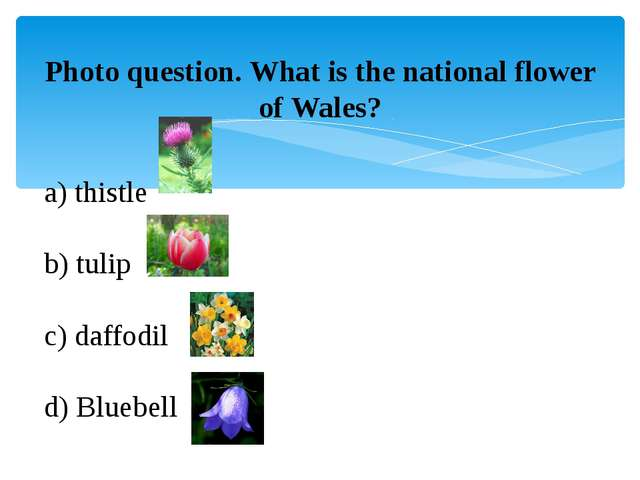 Photo question. What is the national flower of Wales? a) thistle b) tulip c)...