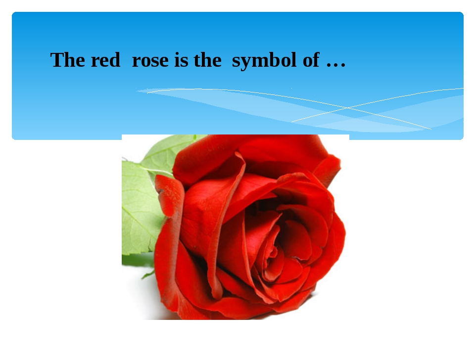 The red  rose is the  symbol of …