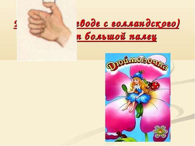 Дюйм (в переводе с голландского) означает большой палец