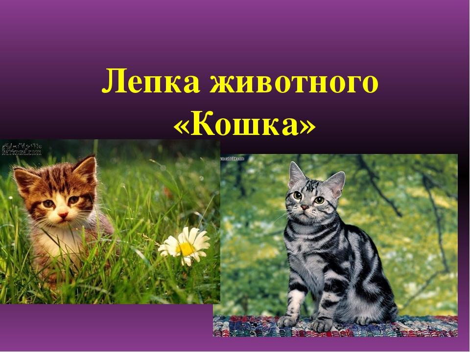 Лепка животного «Кошка»