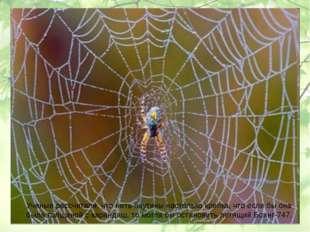 Ученые рассчитали, что нить паутины настолько крепка, что если бы она была то