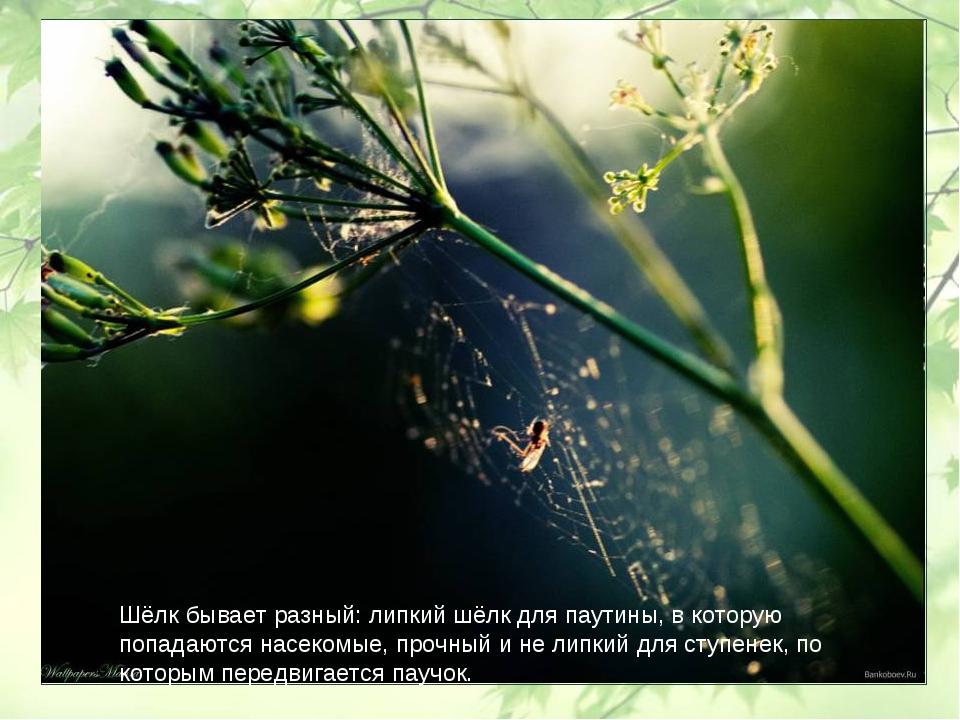 Шёлк бывает разный: липкий шёлк для паутины, в которую попадаются насекомые,...