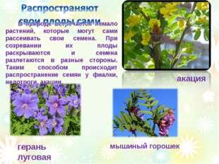 В природе встречается немало растений, которые могут сами рассеивать свои се