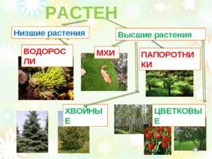 РАСТЕНИЯ Низшие растения Высшие растения ВОДОРОСЛИ МХИ ПАПОРОТНИКИ ХВОЙНЫЕ ЦВ
