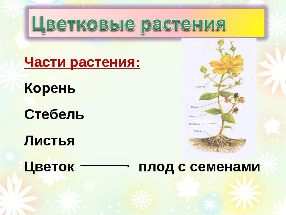 Части растения: Корень Стебель Листья Цветокплод с семенами