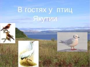 4 В гостях у птиц Якутии