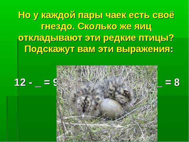 Но у каждой пары чаек есть своё гнездо. Сколько же яиц откладывают эти редкие...