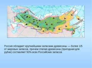 Россия обладает крупнейшими запасами древесины — более 1/5 от мировых запасо