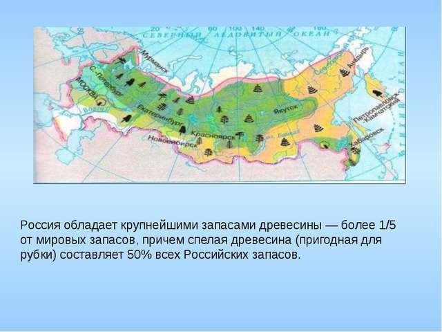 Россия обладает крупнейшими запасами древесины — более 1/5 от мировых запасо...
