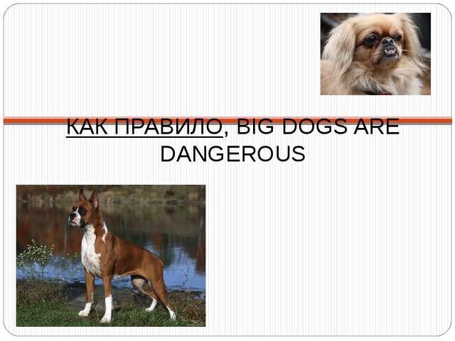 КАК ПРАВИЛО, BIG DOGS ARE DANGEROUS