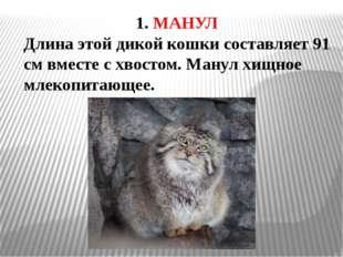 1. МАНУЛ Длина этой дикой кошки составляет 91 см вместе с хвостом. Манул хищн