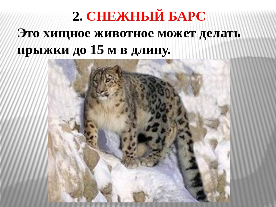 3. ДЖЕЙРАН Название этого животного в переводе с казахского языка обозначает...