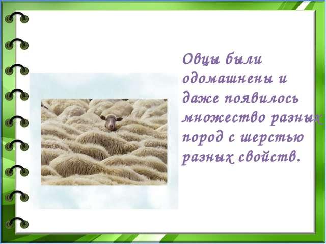 Овцы были одомашнены и даже появилось множество разных пород с шерстью раз...