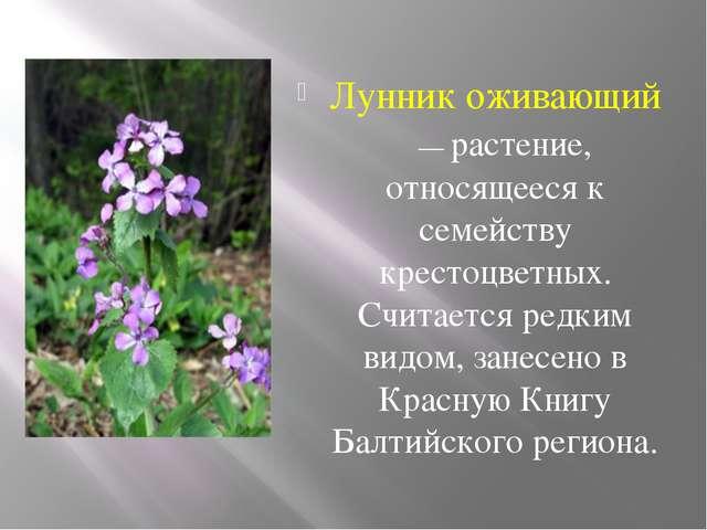 Лунник оживающий — растение, относящееся к семейству крестоцветных. Считаетс...