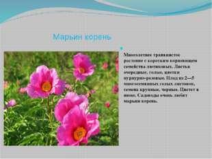 Марьин корень Многолетнее травянистое растение с коротким корневищем семейств