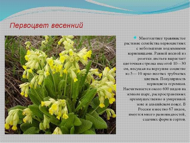 Первоцвет весенний Многолетнее травянистое растение семейства первоцветных с...