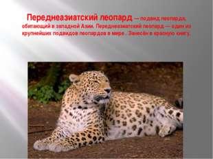 Переднеазиатский леопард — подвид леопарда, обитающий в западной Азии. Передн