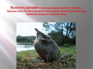 Выхухоль русская в настоящее время животное занесено в Красную книгу России и