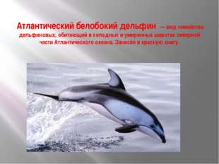Атлантический белобокий дельфин — вид семейства дельфиновых, обитающий в хол