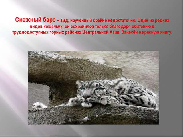 Снежный барс – вид, изученный крайне недостаточно. Один из редких видов кошач...