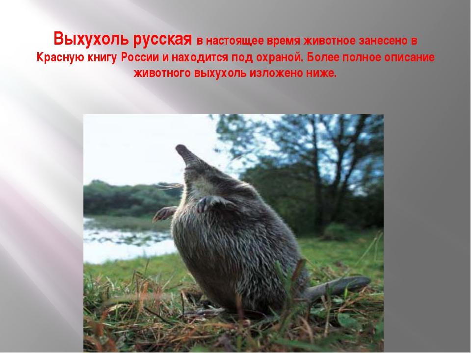 Выхухоль русская в настоящее время животное занесено в Красную книгу России и...